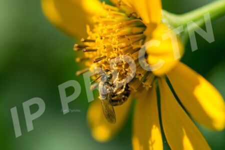 Bee with a flower