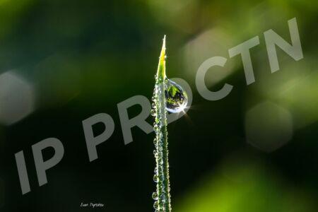 Morning water drops
